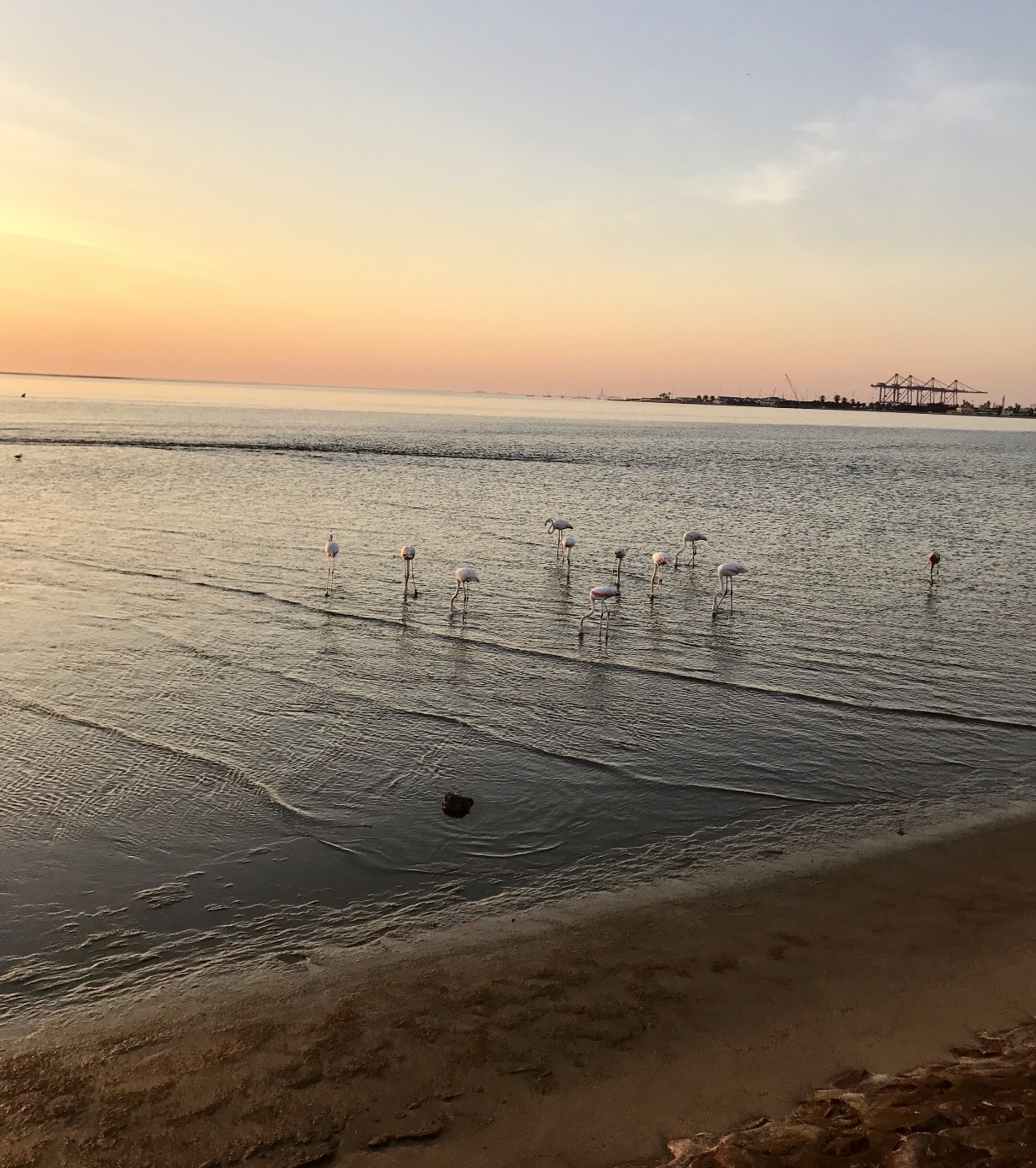 Namibia: A Guide to Walvis Bay – Tips and Tricks